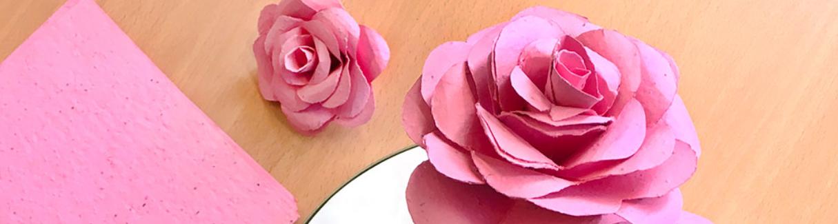 rosas1-1